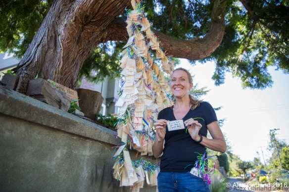 Jane Hamel, keeper of the wishing tree, hasn't added her 2016 wish yet (Images: Alex Garland for CHS)