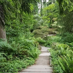 Forest Bathing Walk @ Washington Park Arboretum