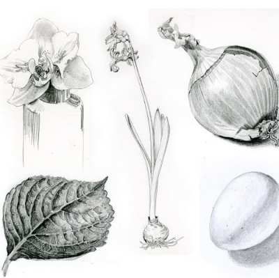 Botanical Drawing @ Center for Urban Horticulture