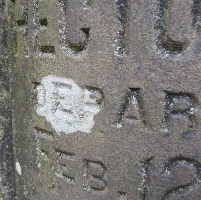 Cemetery Lichens @ Mount Pleasant Cemetery