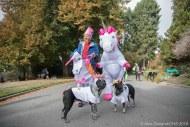 Oreo and Roary the Unicorn Blue Healer Bros