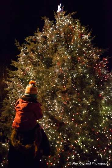 When young, Douglas firs, Pseudotsuga menziesii, are the image of the  Charlie Brown Christmas tree. They're droopy limbed, not for heavy  ornaments, ... - Pikes/Pines A Capitol Hill Christmas Tree Story CHS Capitol Hill