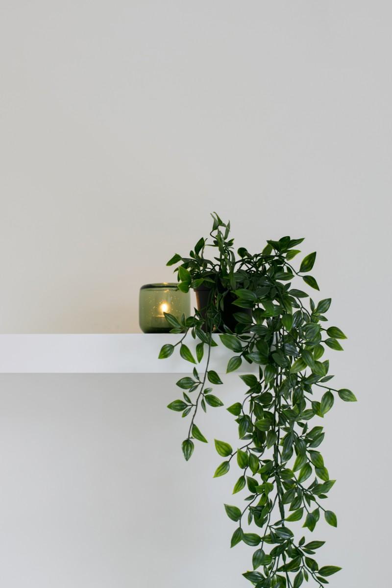 Plant on shelf: Eco-Friendly Decor