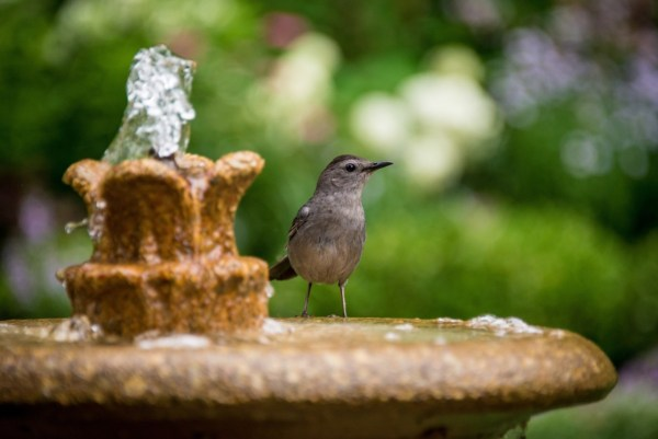 bird water fountain