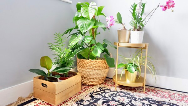 plants: upcycling projects