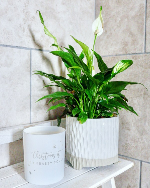 peace lily. Houseplants you can't kill.