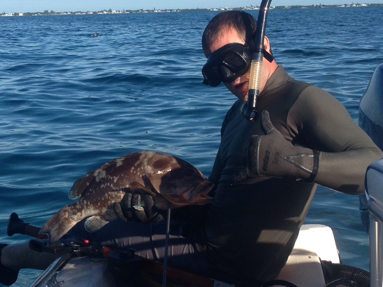 Brent shot this grouper in 25ft of water off Marathon in the Fl Keys. The Fl Keys offer great spear fishing year round.