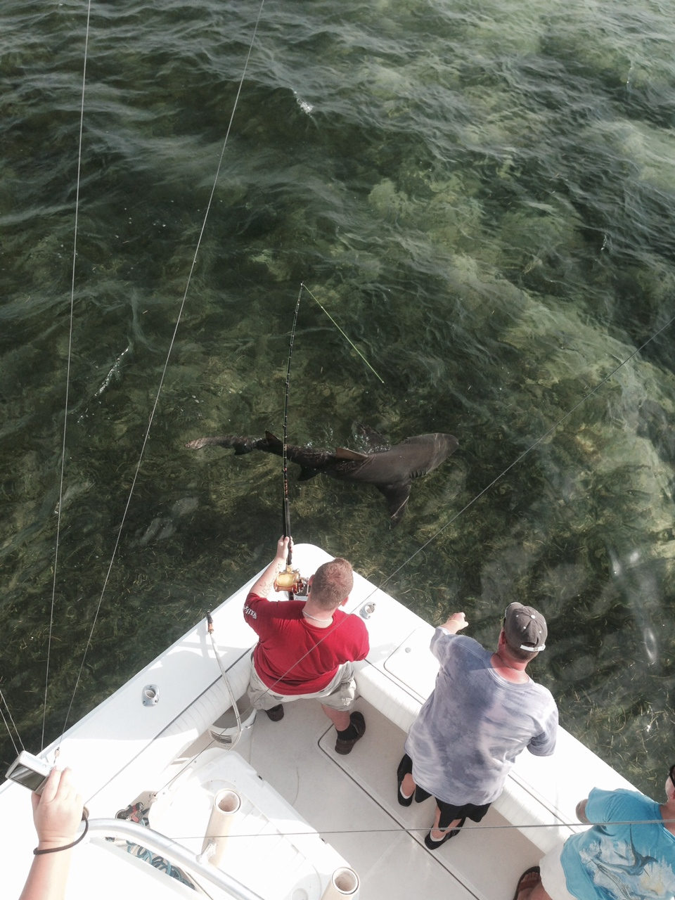 Shark fishing off Marathon in the Florida Keys.