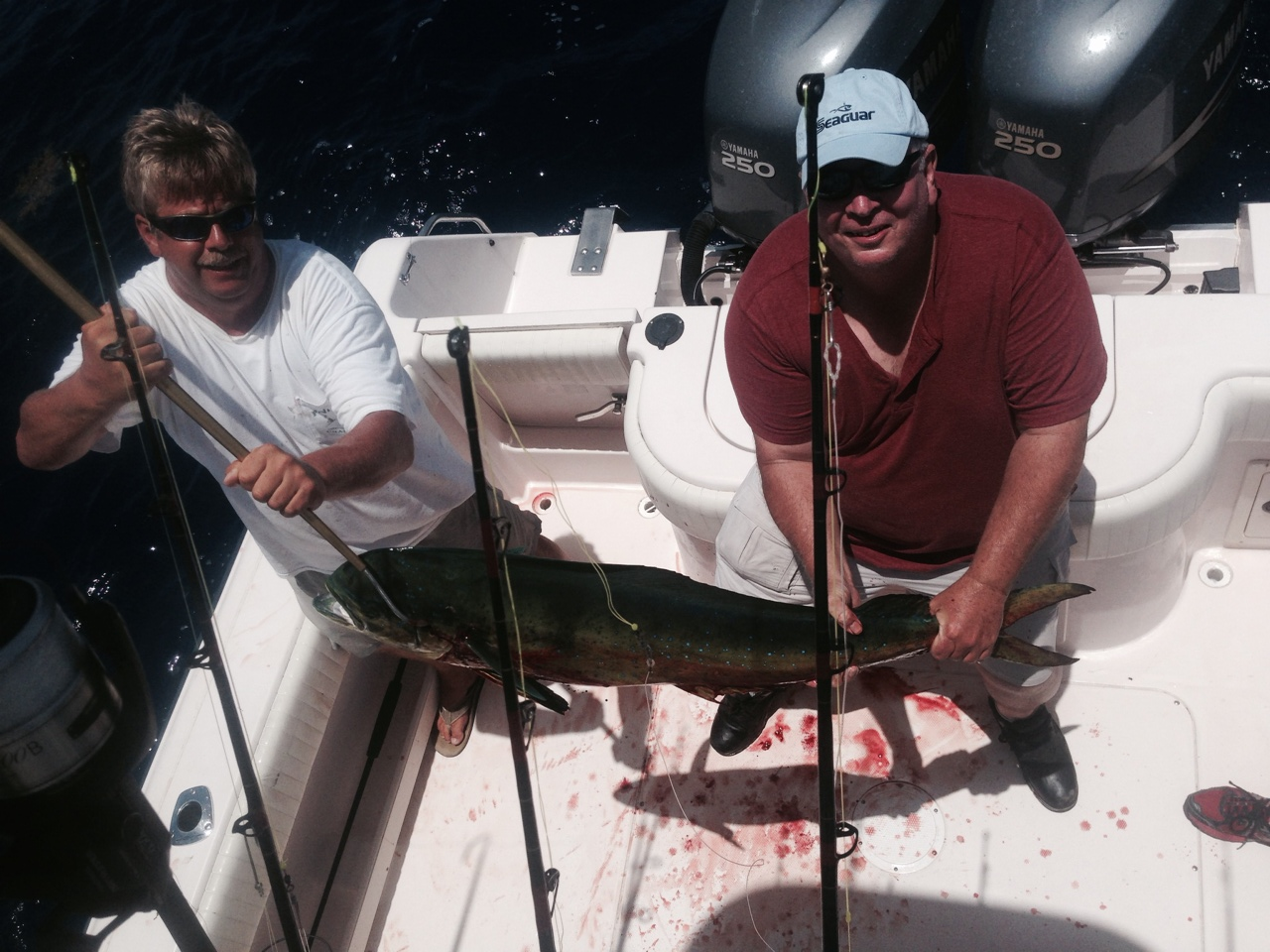 Dolphin fishing charter off Marathon in the Fl Keys.