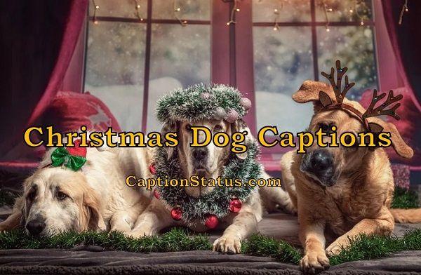 Christmas Dog Captions