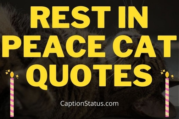 Rest in Peace Cat Quotes