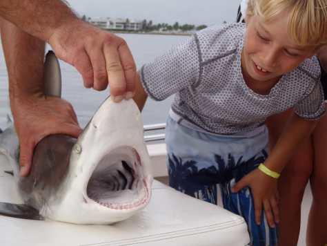 Black tip Shark, Catch & Release, Bayside, Sanibel & Captiva Islands Charters & Fishing Guide Service.