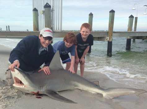 Sandbar Shark, 12-30-13, Redfish Pass, North Captiva, Sanibel & Captiva Islands & Fort Myers Charters & Fishing Guide Service.