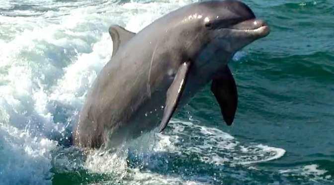 Captiva Fishing, Dolphins, August 28, 2017