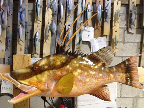Custom hogfish mount