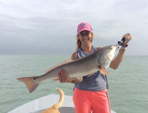 Big Redfish, Sanibel Oyster Bar, Sanibel Fishing & Captiva Fishing, Friday, September 2, 2016.