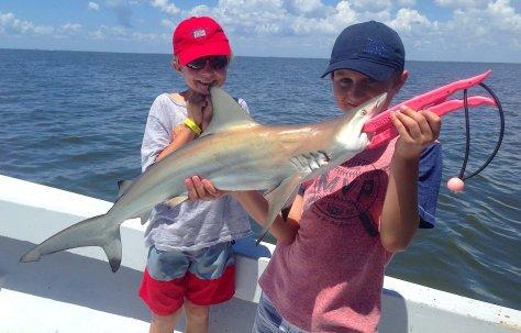 Blacktip Sharks, Stealing The Tarpon Bait, Catch & Release, Sanibel Fishing & Captiva Fishing, Sanibel Island, Sunday, October 12, 2017, [File Photo -  Tuesday, August 8, 2017].