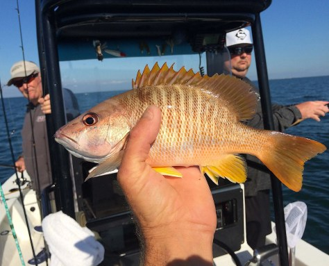 Schoolmaster Snapper, Sanibel Fishing & Captiva Fishing, Sanibel Island, Thursday, January 11, 2018, [File Photo - Thursday, December 28, 2017].