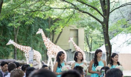 186-brookfield-zoo-wedding