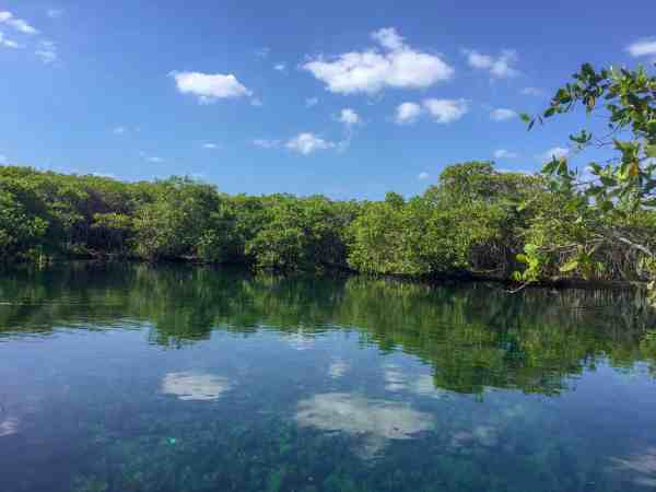 Cenote surrounded by trees and a clear blue sky with some tiny clouds