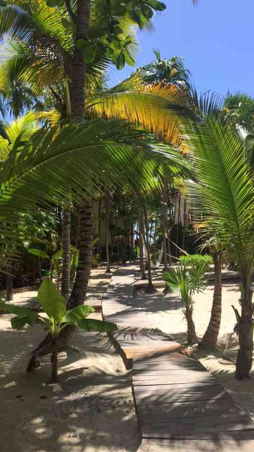 Path with palmtrees on both sides and white sand