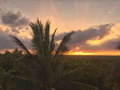Sunset over a view filled with palmtrees