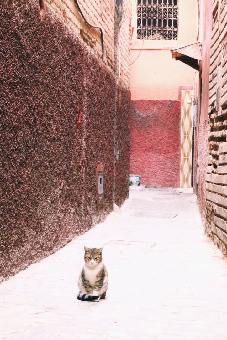 Cat sitting in front of brown red colored walls in Marrakech