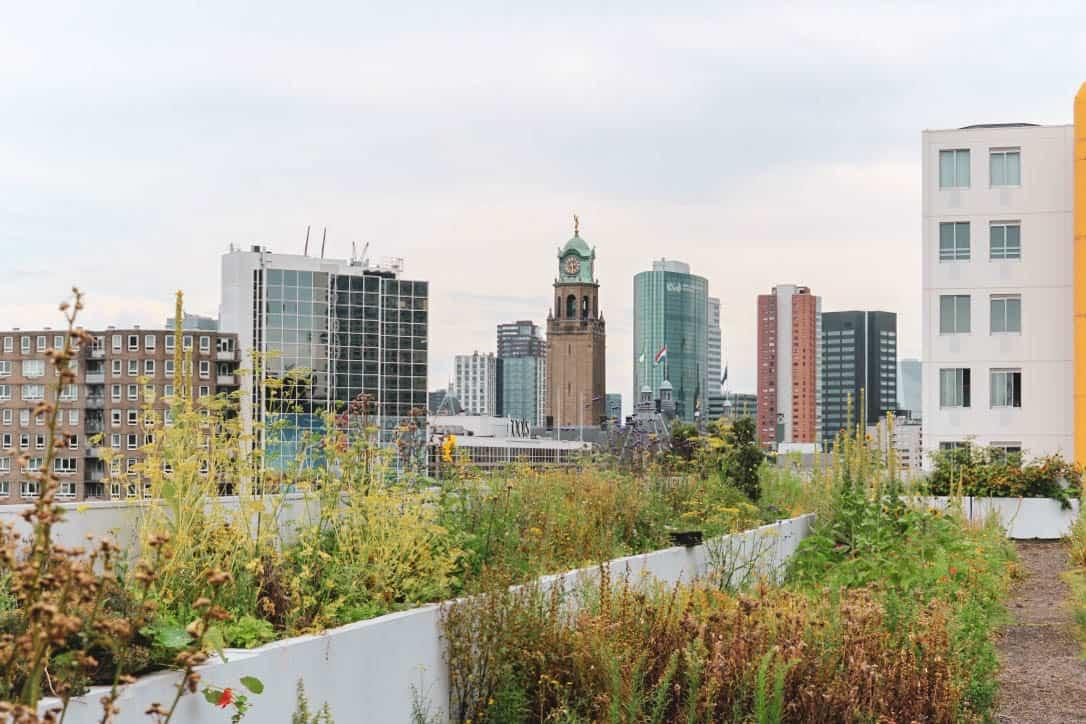 Uitzicht op skyscrapers vanop het dak van ophetdak in Rotterdam