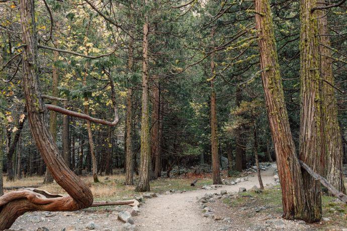 photographer-yosemite-usa-california-022