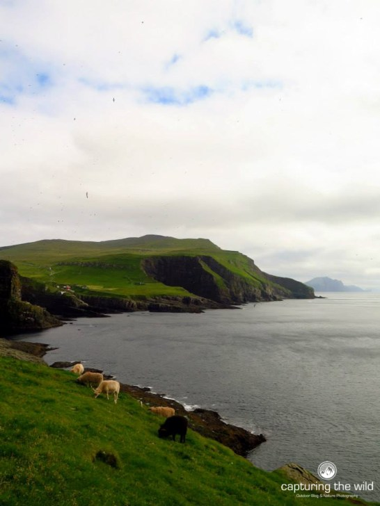 faroe_islands-10