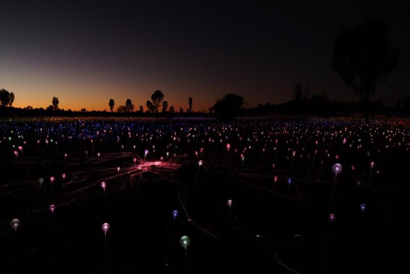 Field of light à 6 h du matin - Uluru