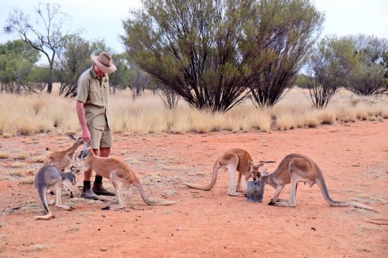 sanctuaire kangourous alice springs 3