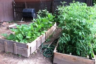 Garden Beds