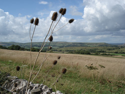 View from Kingston Towards Corfe Castle
