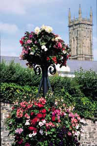Barnstaple in Bloom