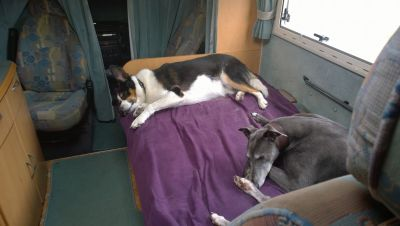 Dogs asleep in motorhome