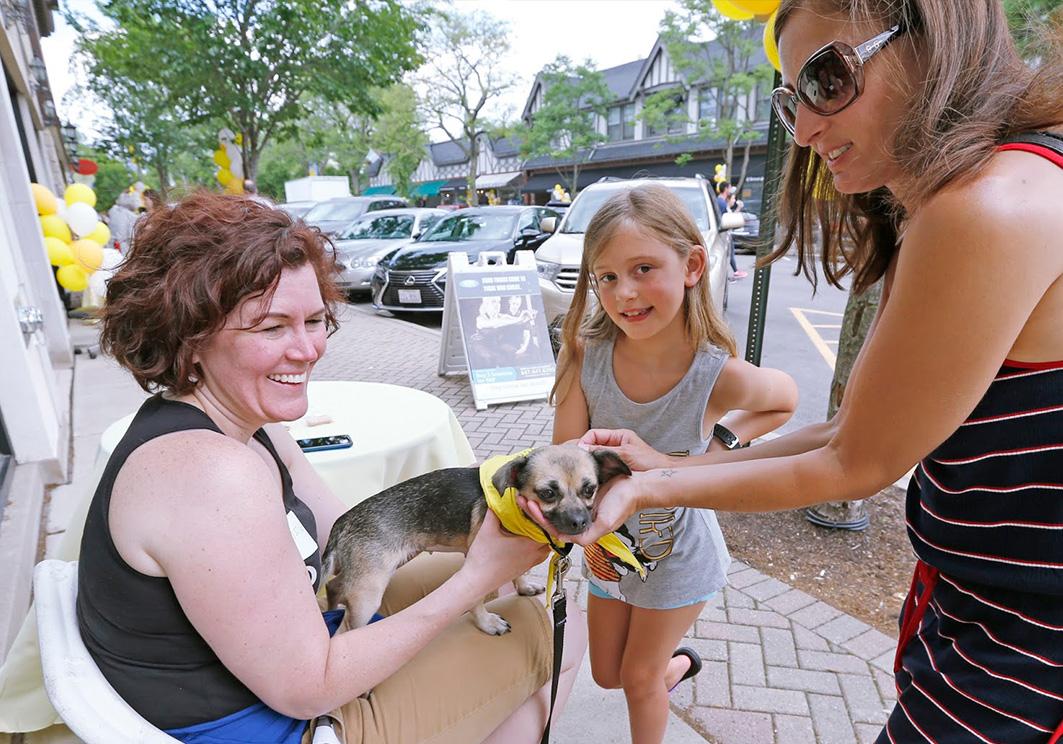 PAWS Volunteer Carousel 3