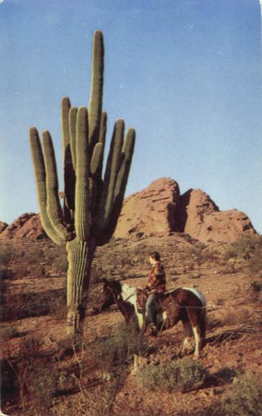 Giant Saguaro Cactus Cactus Amp Desert Plants