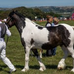 Cardigan County Show