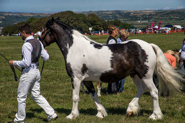 Cardigan County Show 2017