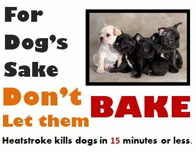 Dog heat stroke warning