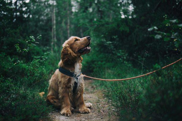 Potty training dog