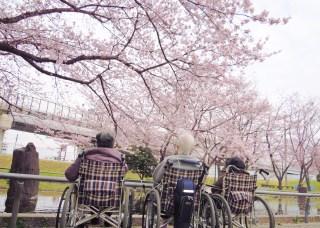 桜花見&花見御膳その1