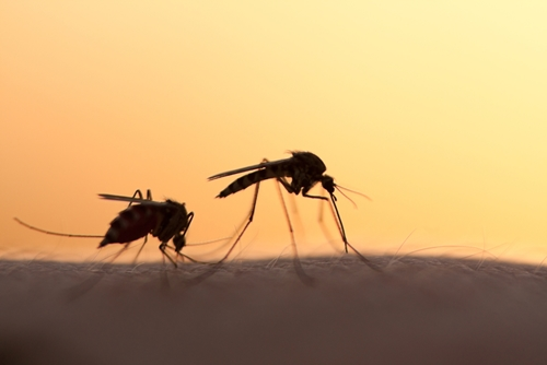 4 tips for protecting yourself from mosquitoes