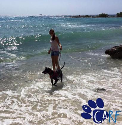 Adopt a dog from Curaçao! Sniffy on a walk (Nov. 2015)