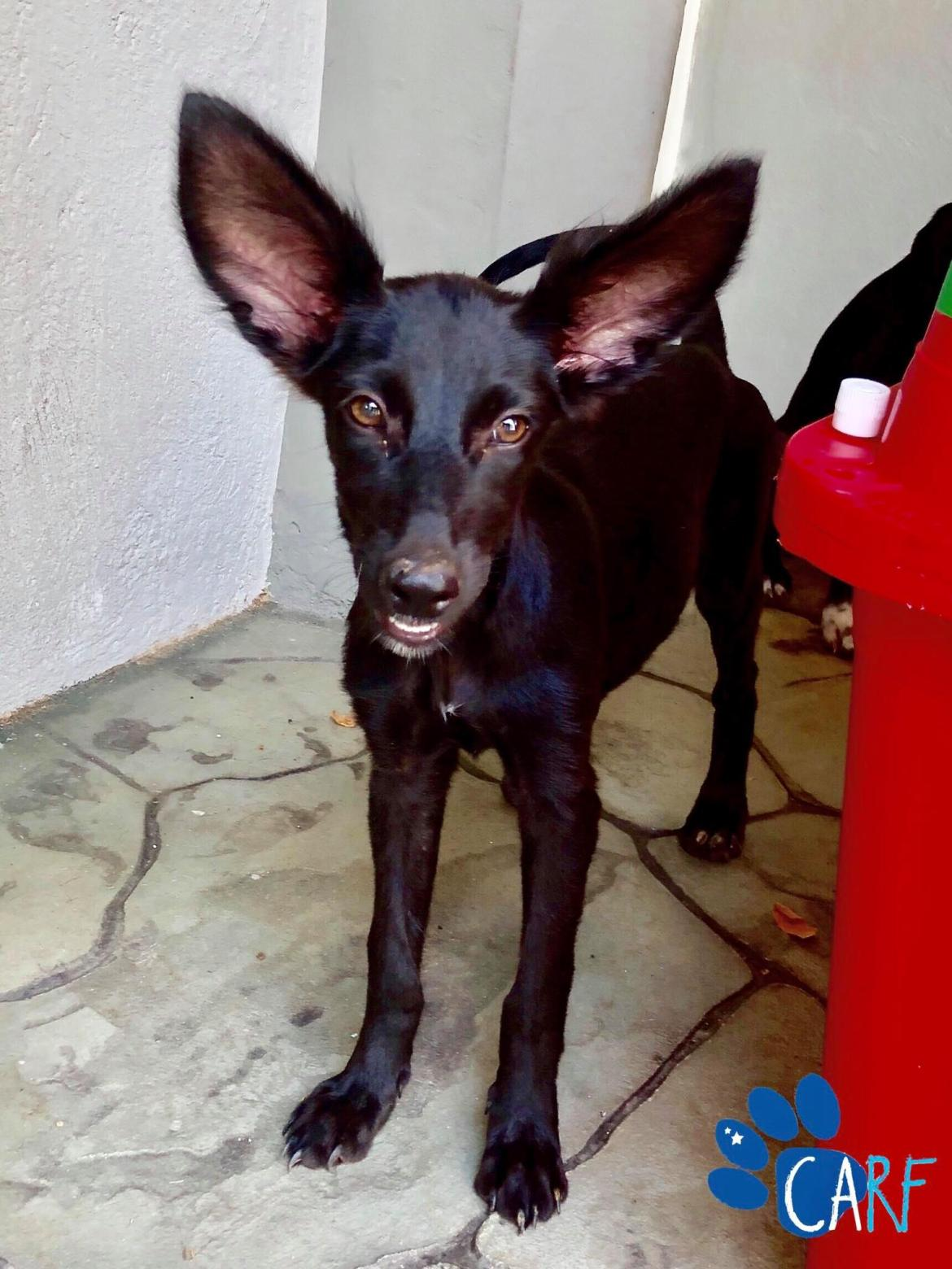 Rani is looking for a home