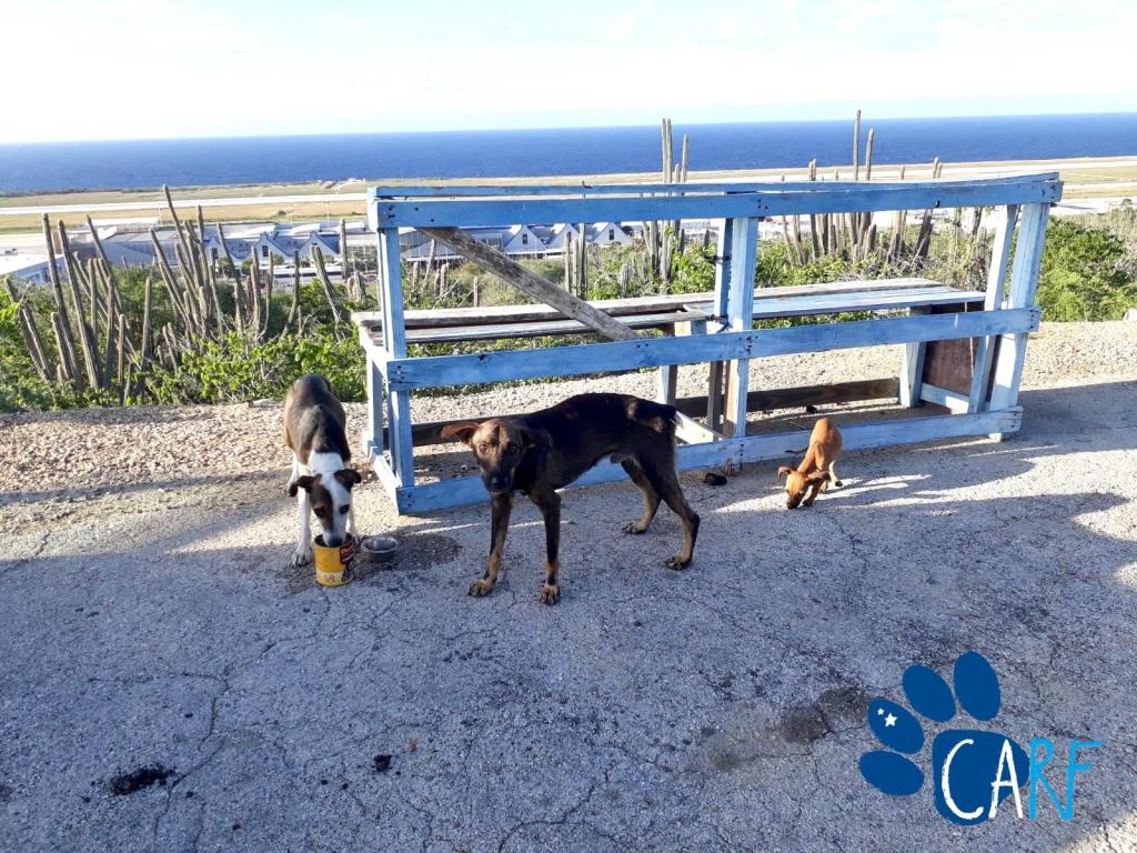 Photographer Eduardo Rescues Dog Family Of Three near Curaçao Airport