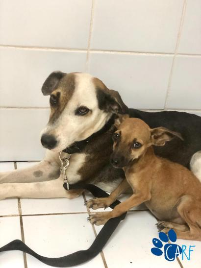 Dog family of three rescued!