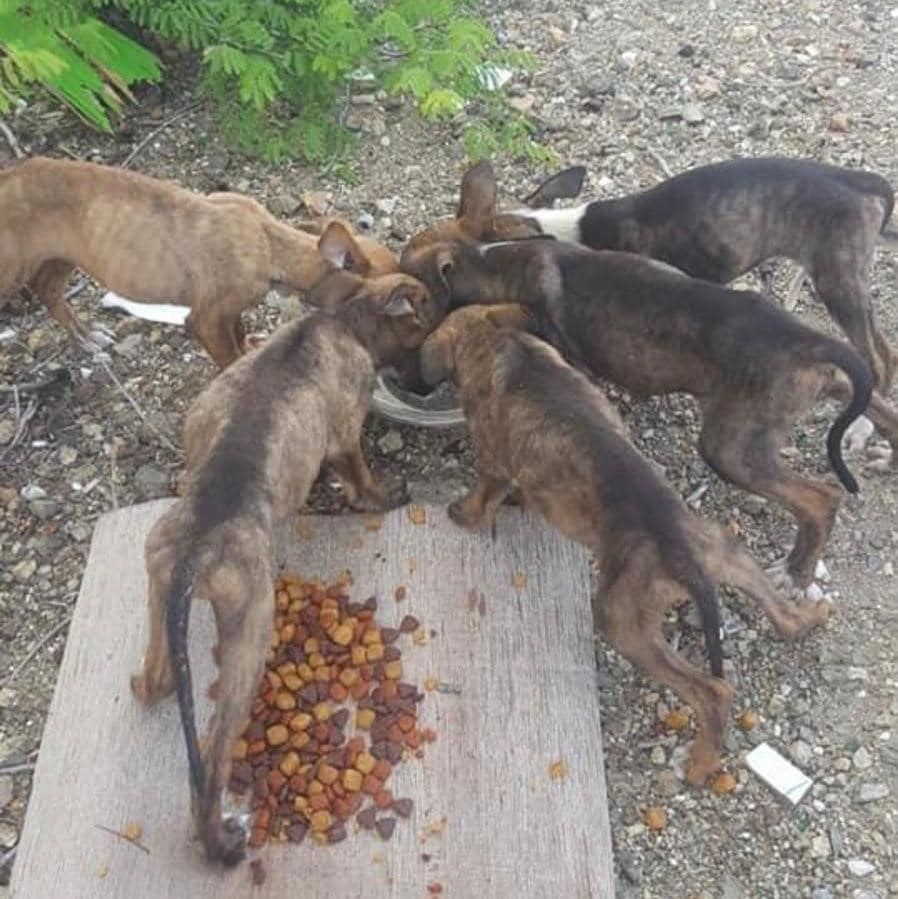 Dumped puppies rescued by CARF