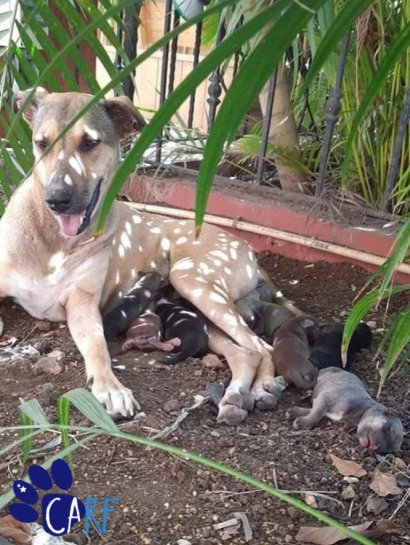 Momma and her 8 puppies